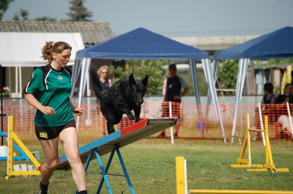 Agility-Wippe