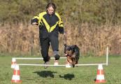 Turnierhundsport-Hürdenlauf