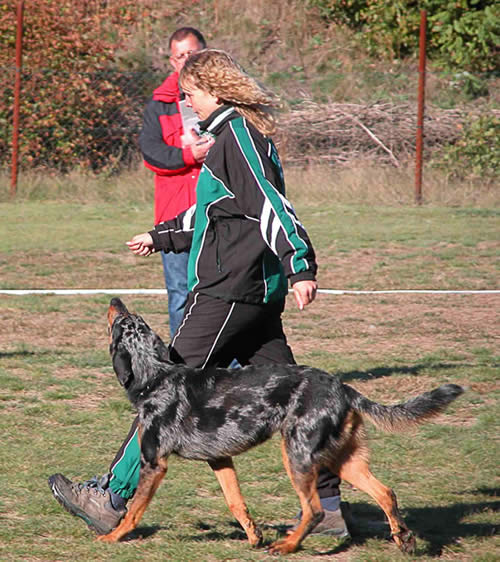 Turnierhundsport-Gehorsam